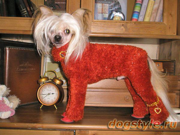 Связать комбинезон для маленькой собаки