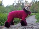 Комбинезон для маленькой собачки